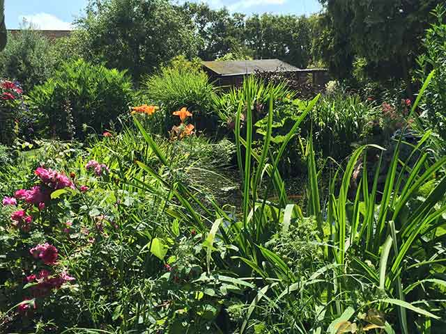 our garden and cattery, Hailsham, East Sussex