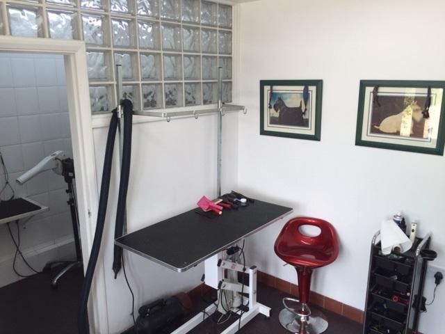 Cat groomers grooming salon 640
