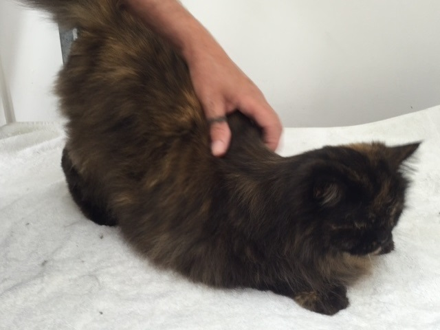 Cat groomers long haired cat stroke 640