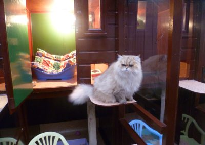 Cattery East Sussex long hair cat sat on shelf 600