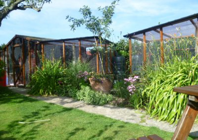 Cattery East Sussex single and double units outdoor space 600